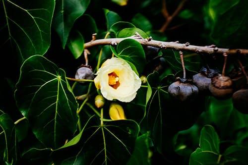 Huckberry insider's guide hawaii volcanoes national park kelsey boyte know before you go flower.jpg?ixlib=rails 2.1