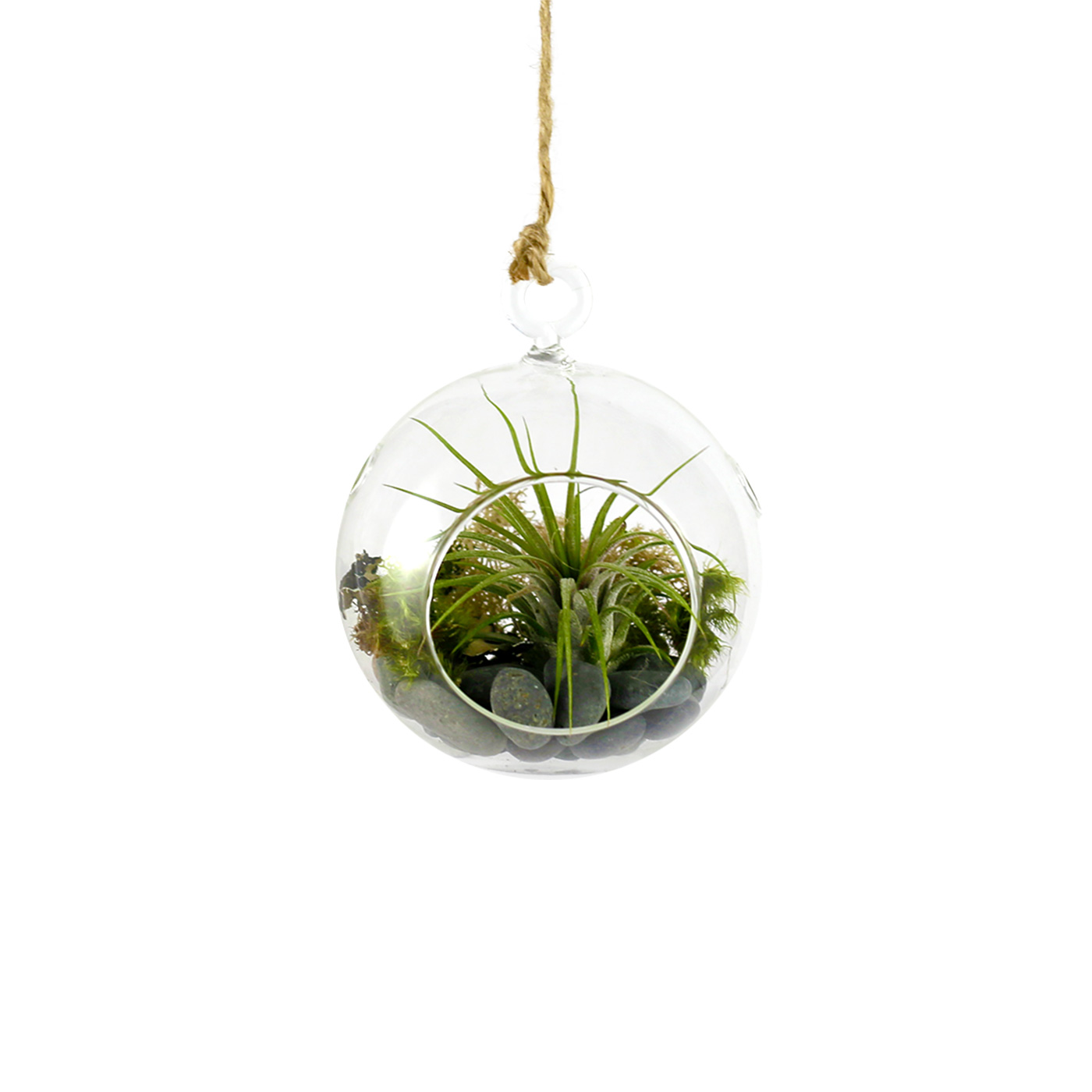 MakersKit DIY Hanging Air Plant Terrarium Kit
