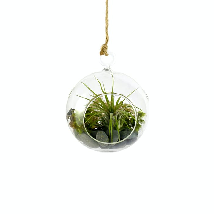 how to create a hanging terrarium