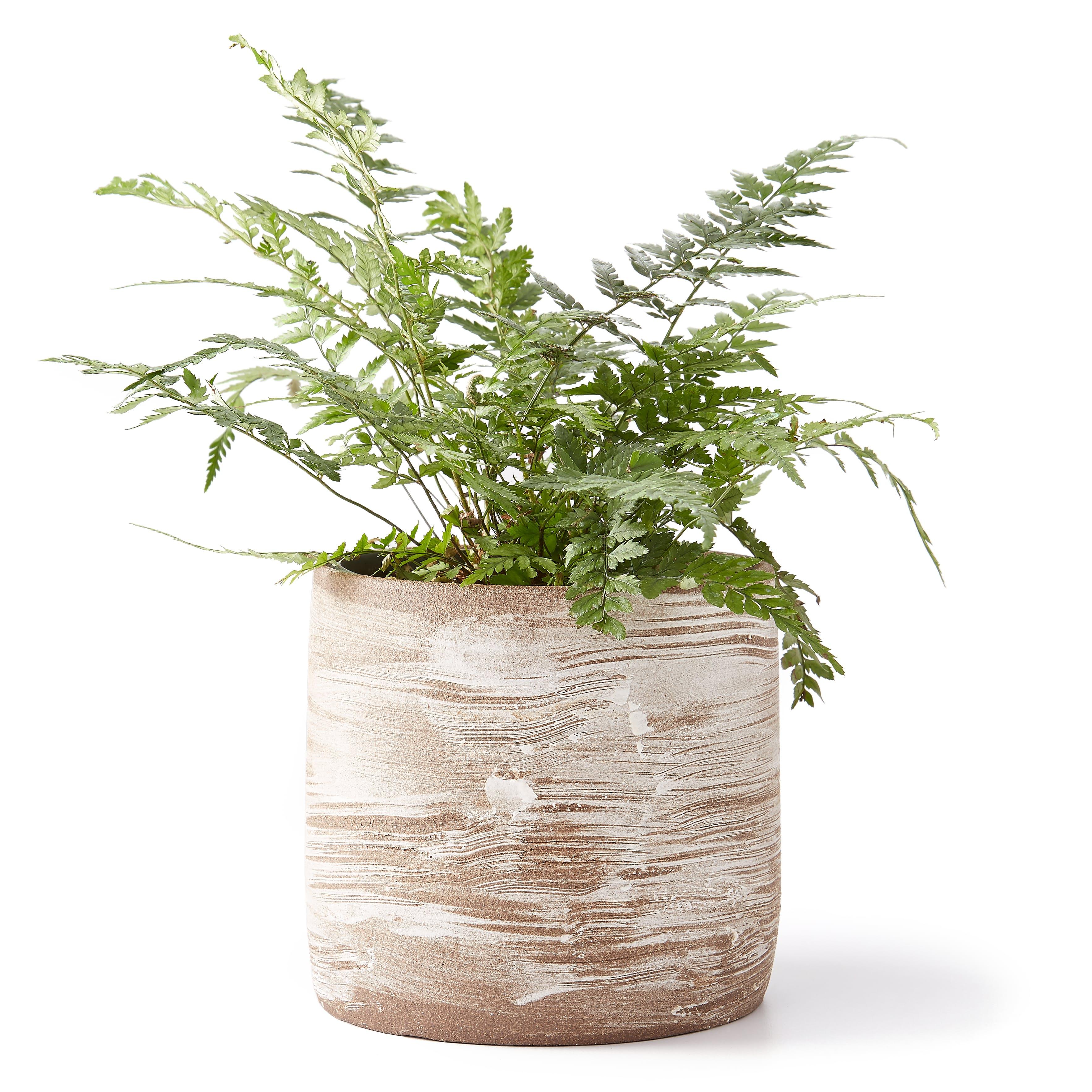 Vbmuowtlqb uzumati ceramics alpine winds planter exclusive 0 original