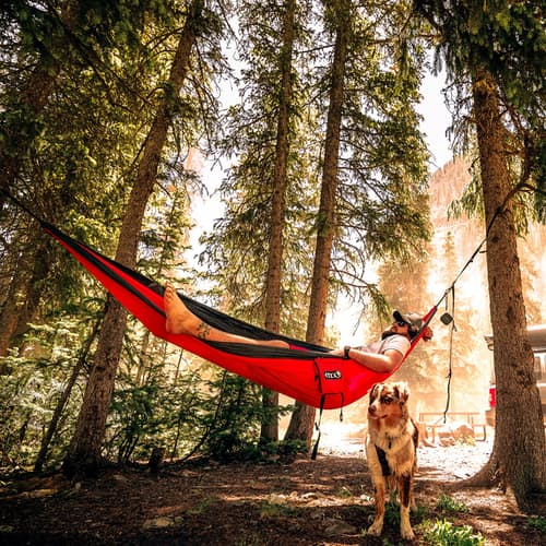 tree nest tent in from family a switch hanging top to hammock reasons sitting sky