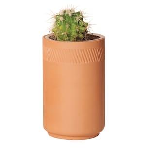 Prickly Pear Cactus Grow Kit