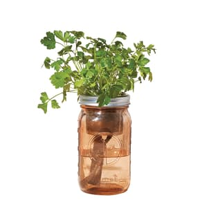 Organic Parsley Garden Jar