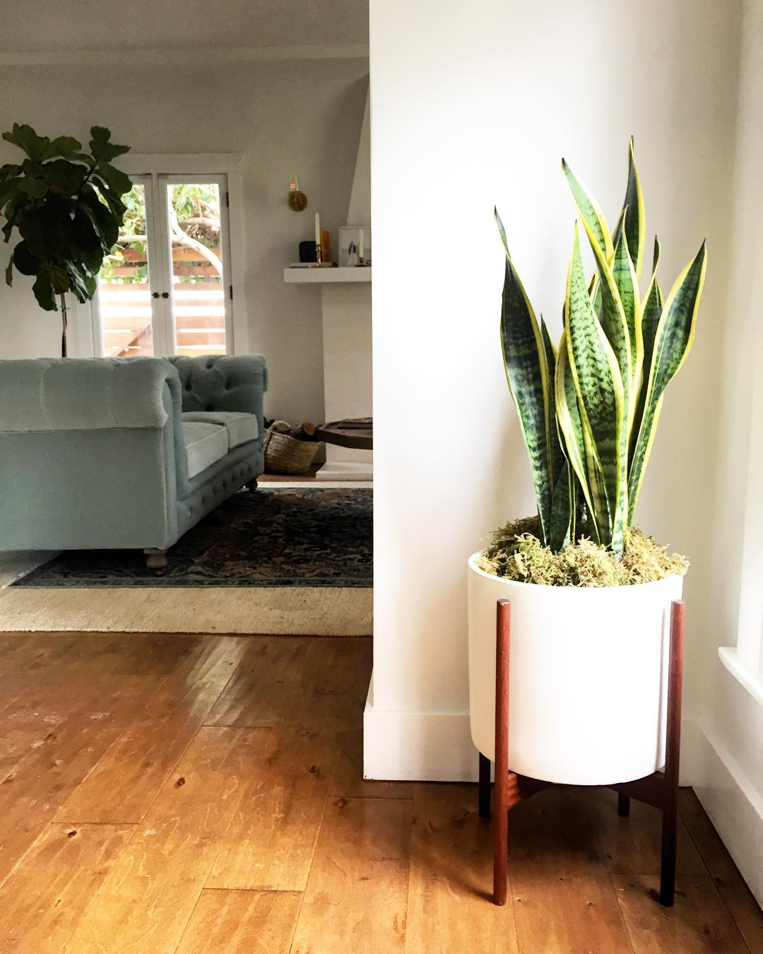 best indoor plants for office. 1. Snake Plant Best Indoor Plants For Office