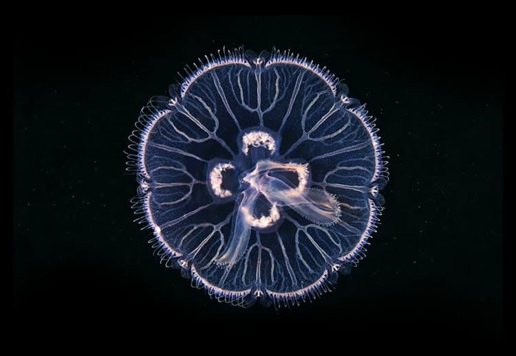 Aquatilis Ocean Adventure Huckberry