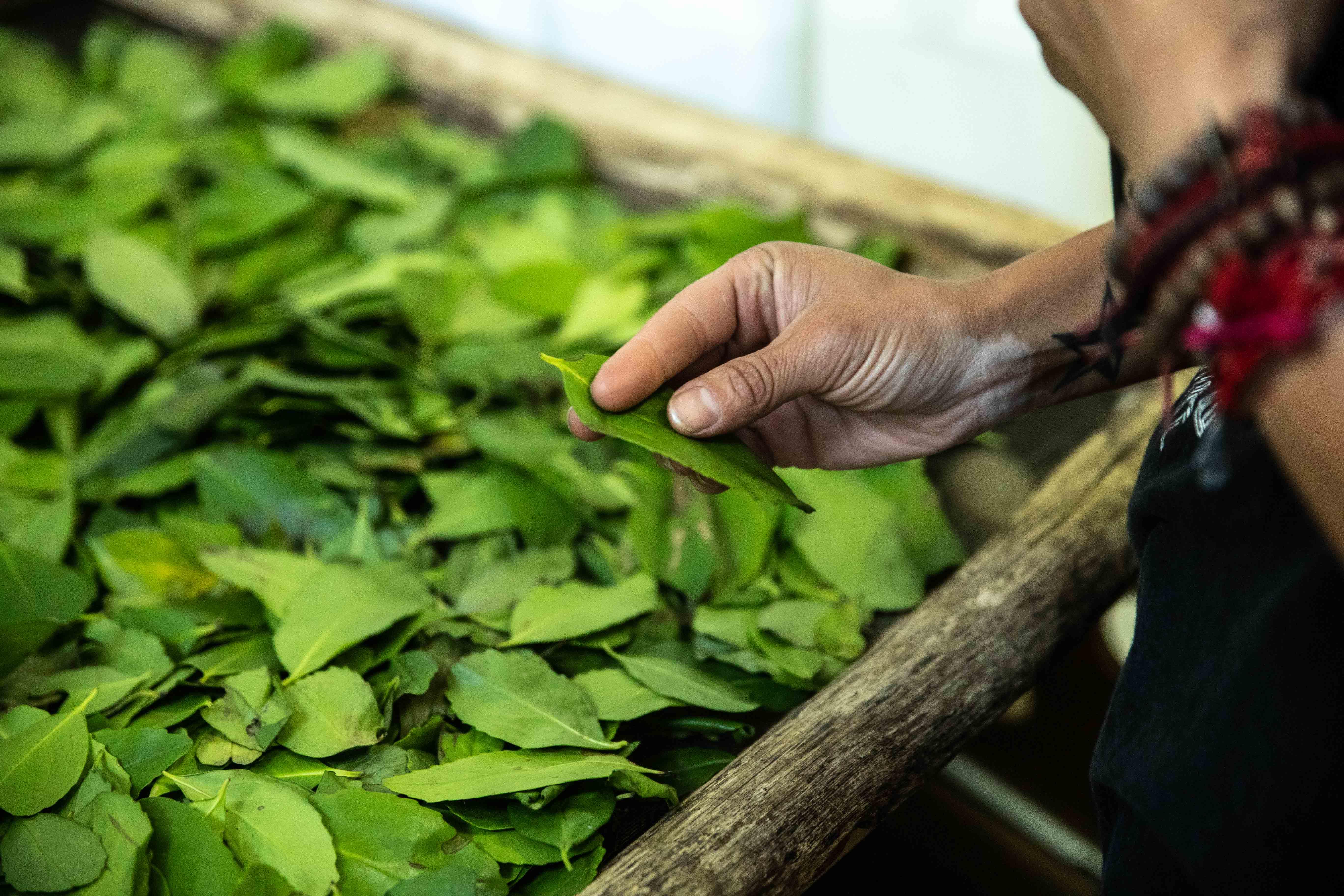 Herbs of Patagonia