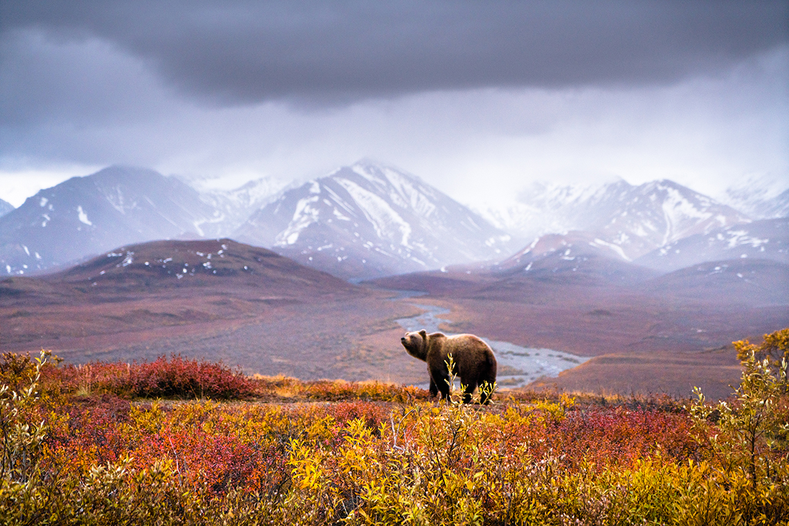 denali national park lesbian dating site In the winter, thick snow blankets alaska's denali national park and  scientists  at hard-to-reach sites near the park's glacier-fed wonder lake.