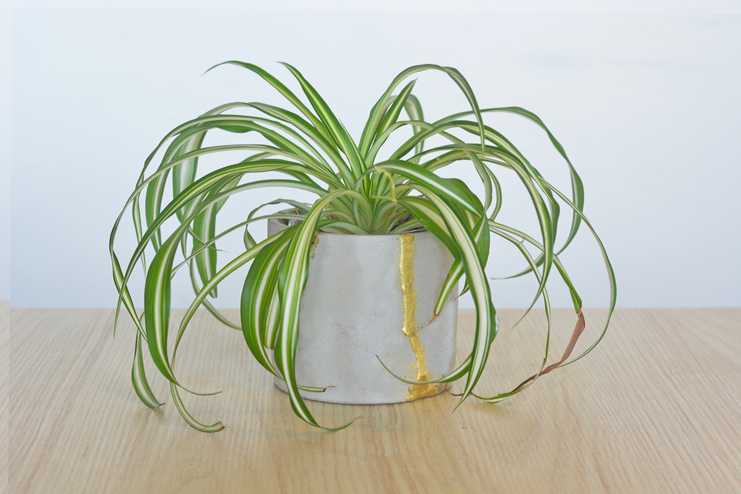 Kintsugi Planter with Plant