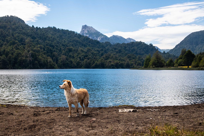 Dog in Patagonia