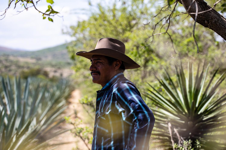 Oaxacan Agave