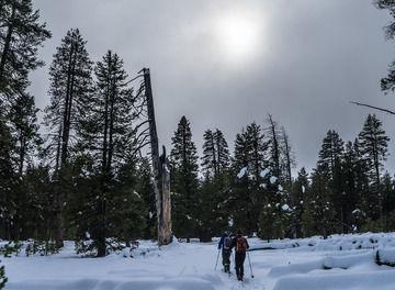 Tile kyle frost header