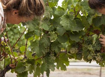 Tile huckberry scribe winery alanna hale header 2.0