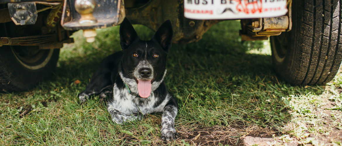 Featured huckberry how to train an adventure dog alison vagnini header