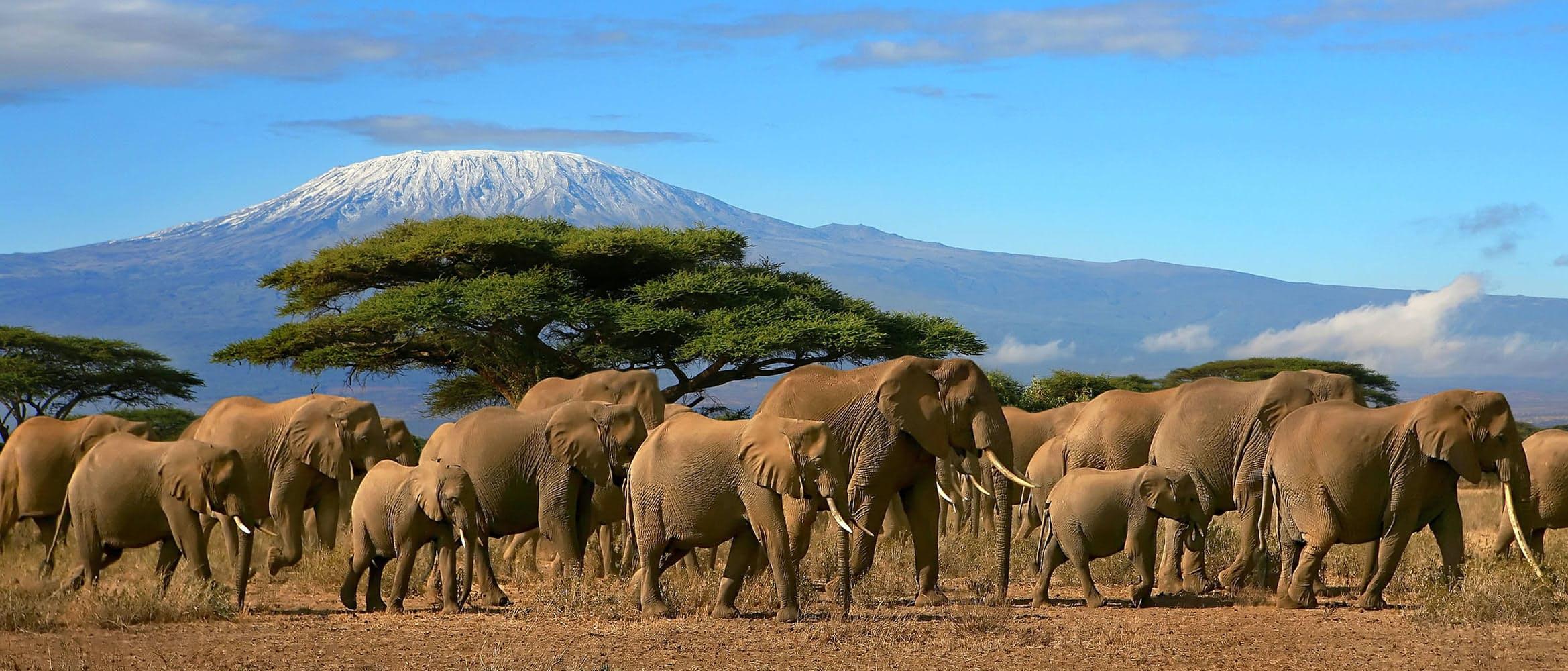 Featured 2x huckberry king of kilimanjaro michaela trimble header.jpg?ixlib=rails 2.1