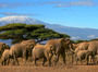 Thumbnail huckberry king of kilimanjaro michaela trimble header