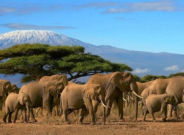 Tile huckberry king of kilimanjaro michaela trimble header.jpg?ixlib=rails 2.1