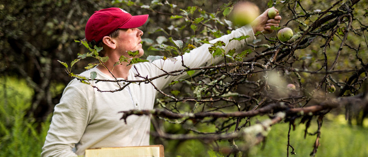 How a Painful Car Crash Led to a Wild Orchard Cider Company
